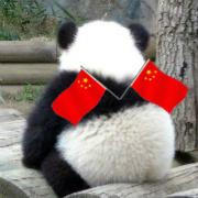 天才小熊貓